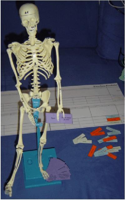 Knochen Skelett Bezeichnung der Knochen auf Deutsch, Englisch und Latein